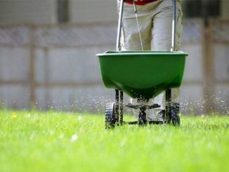 Buying Guide for Green Grass Fertilizers