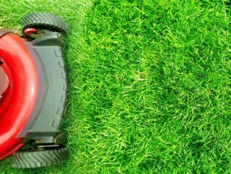 HOW SOON CAN YOU MOW YOUR LAWN AFTER FERTILIZING IT