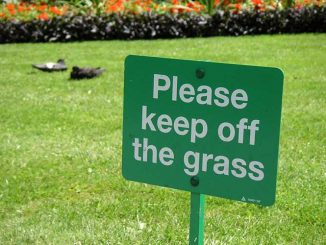 How Long Should You Stay Off Your Grass After Fertilizing It?