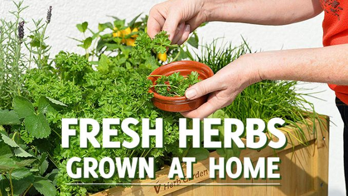 Growing Fresh Herbs at Home