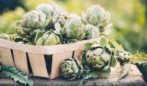 harvesting artichokes grown in pots