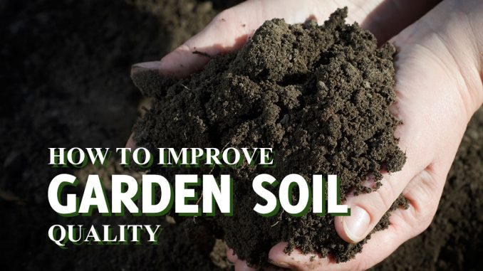 How To Improve Garden Soil Quality
