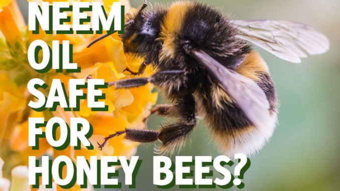 Is neem oil safe for bees?